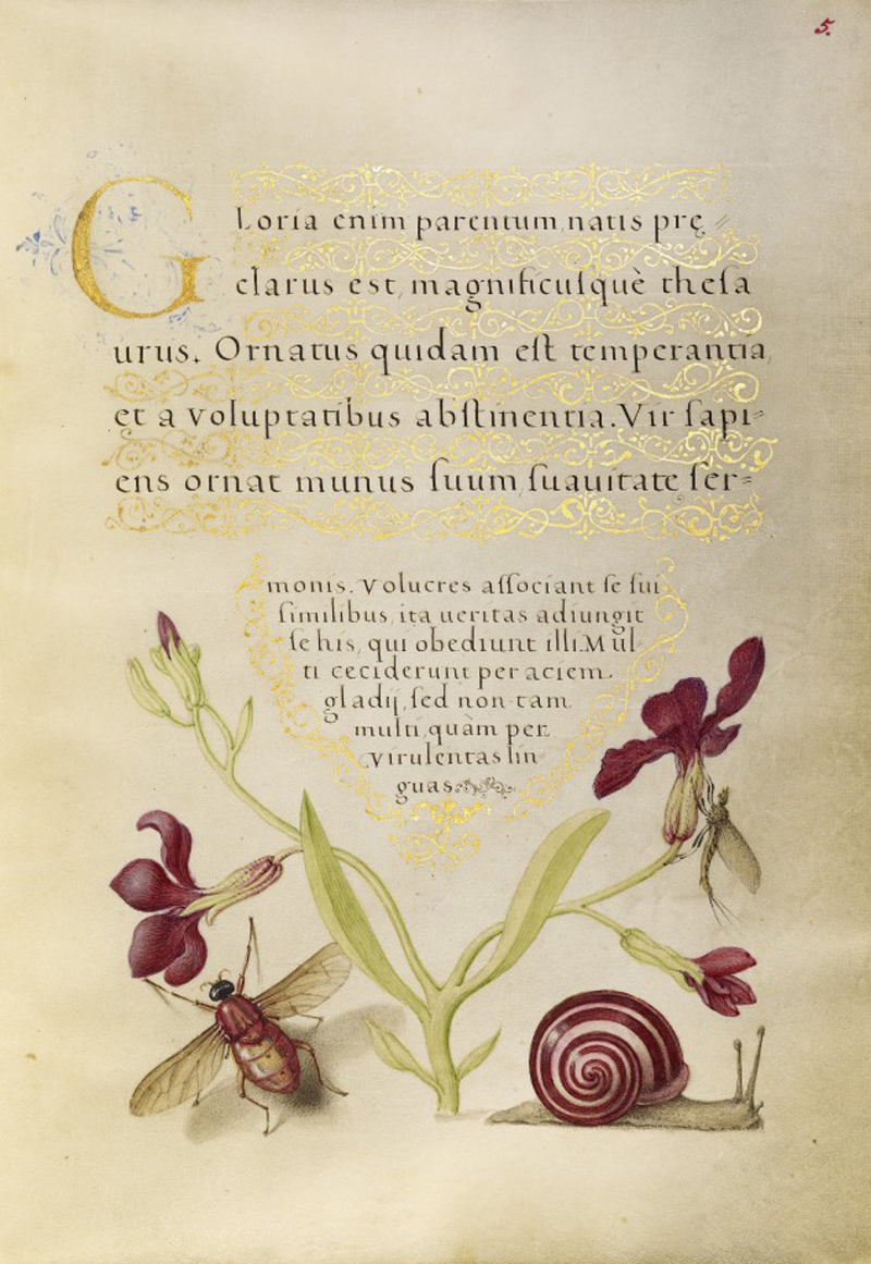 Mira-calligraphiae-monumenta-11-634x920