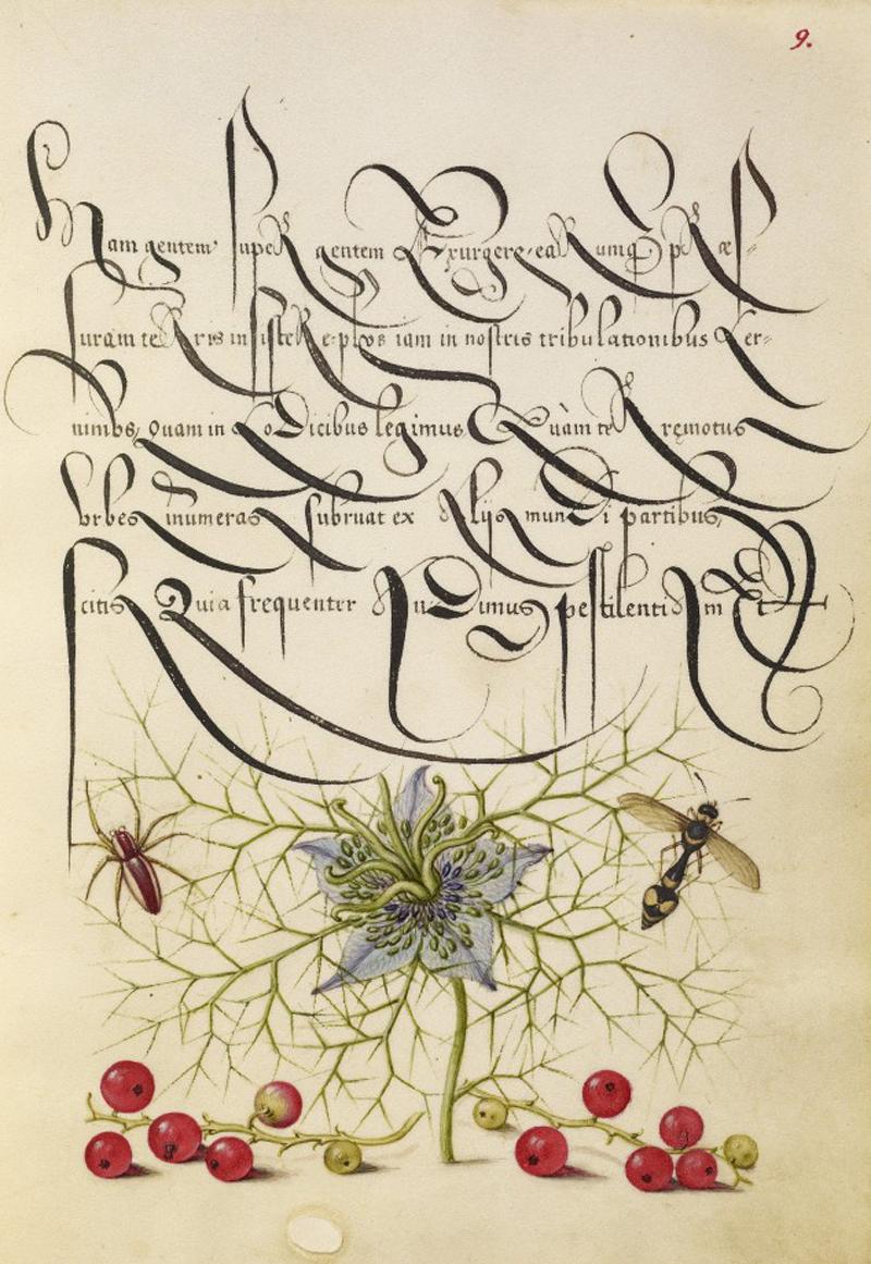 Mira-calligraphiae-monumenta-13-634x920