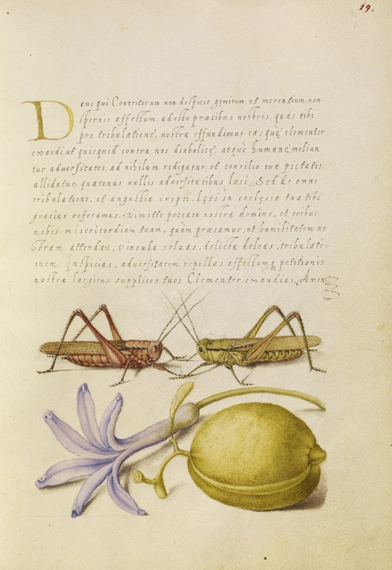 Mira-calligraphiae-monumenta-15-634x920