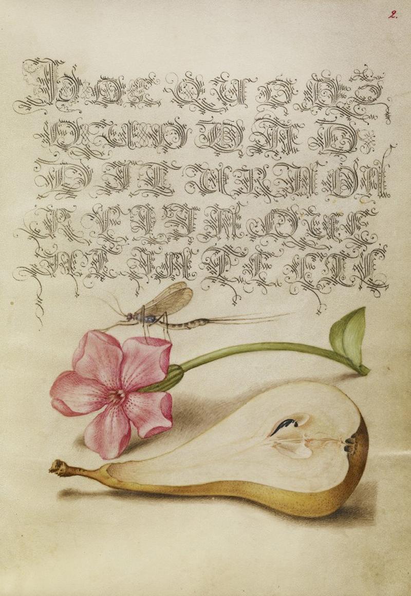 Mira-calligraphiae-monumenta-18-634x920