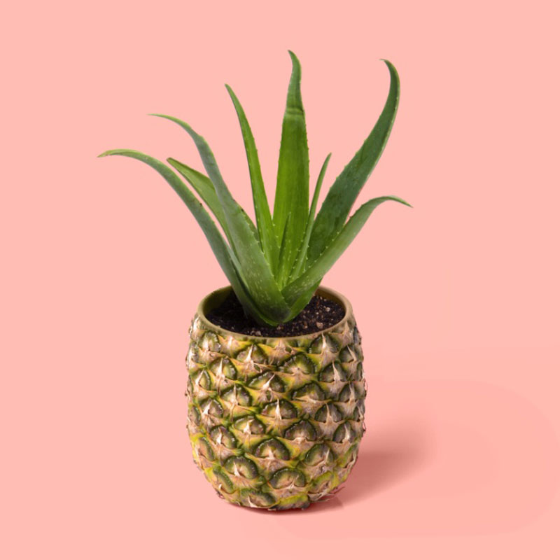 pineapple-cactus-pot-prints