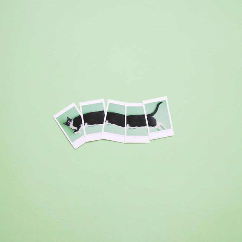Cat dreams by Hugo Martinez