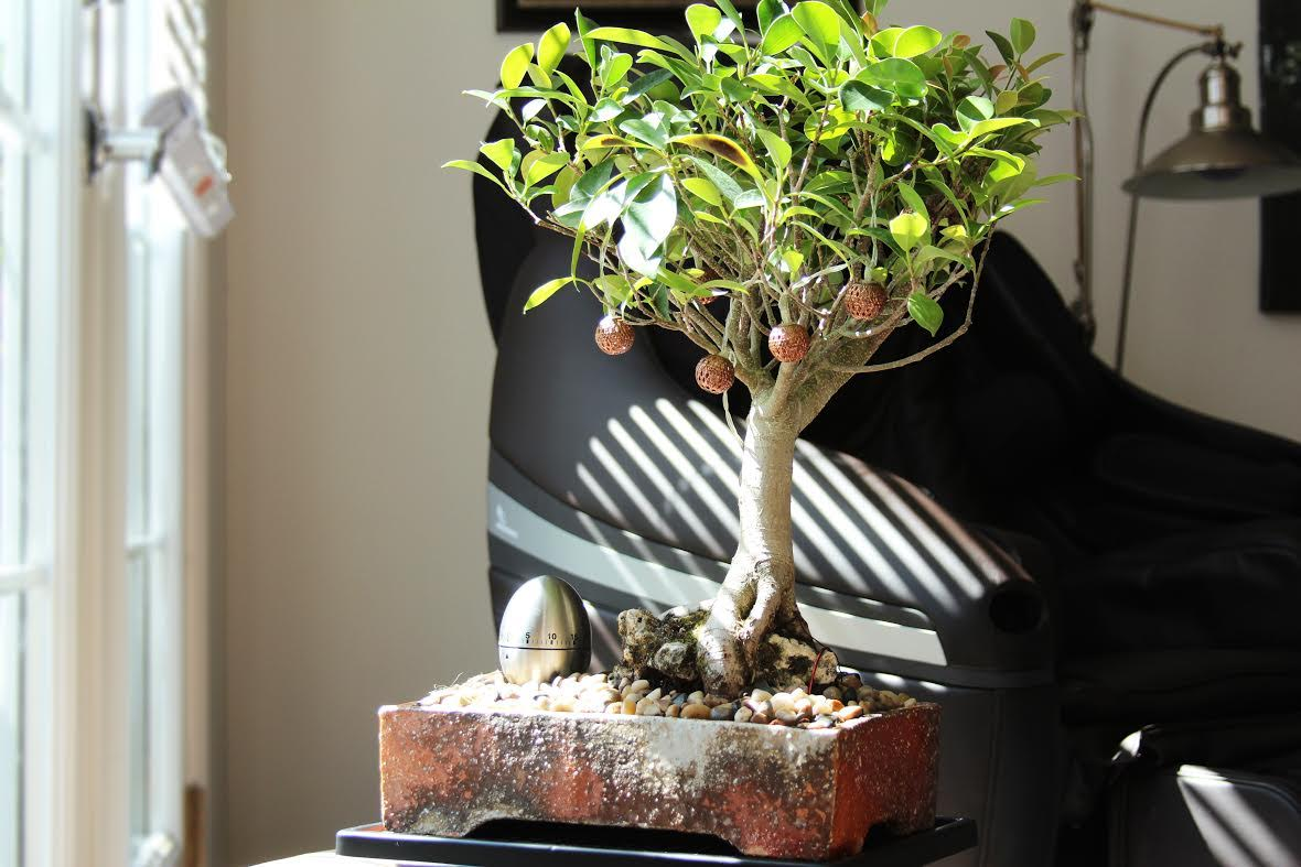 bonsaii-2