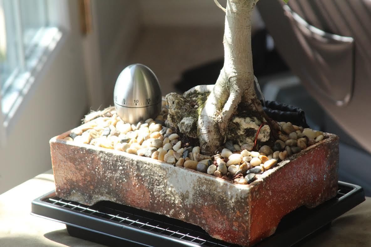 bonsaii-3