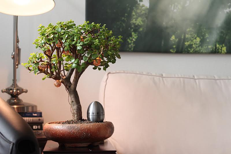 bonsaii-4