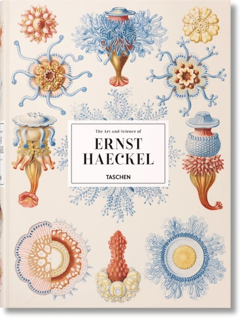 Illustrations of microbes as a form of art, a look at Ernst Haeckel's work