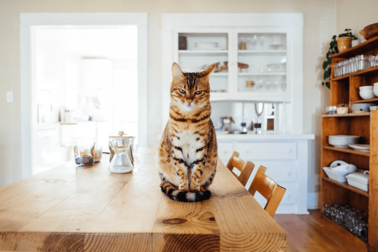 Ideas for Designing and Decorating your Cat-Themed Home