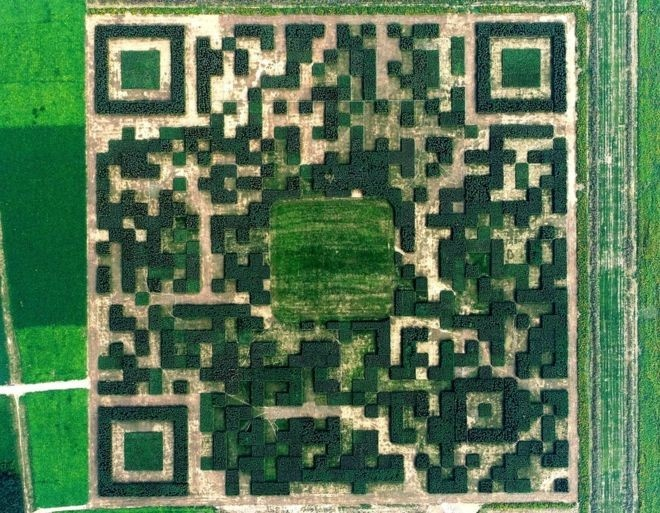 A Giant QR Code Made Of Trees
